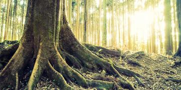 Eliminación de raíces en tuberías